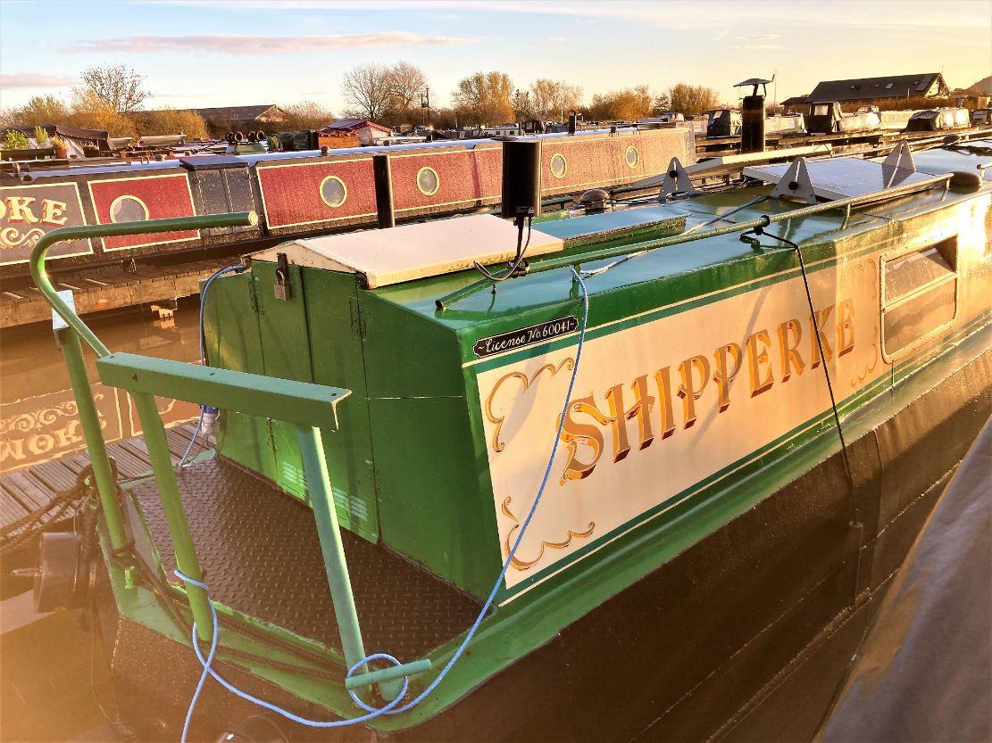 Shipperke 12